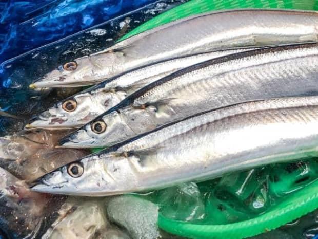秋刀魚が無料で食べれる【目黒のさんま祭り】〜さんまの選び方と焼き方