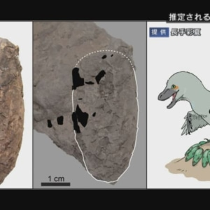 世界最小の恐竜の卵化石発見 丹波地域に分布の篠山層群