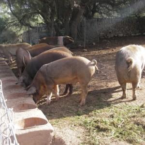 家畜の歴史
