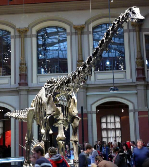 消えたセイスモサウルス